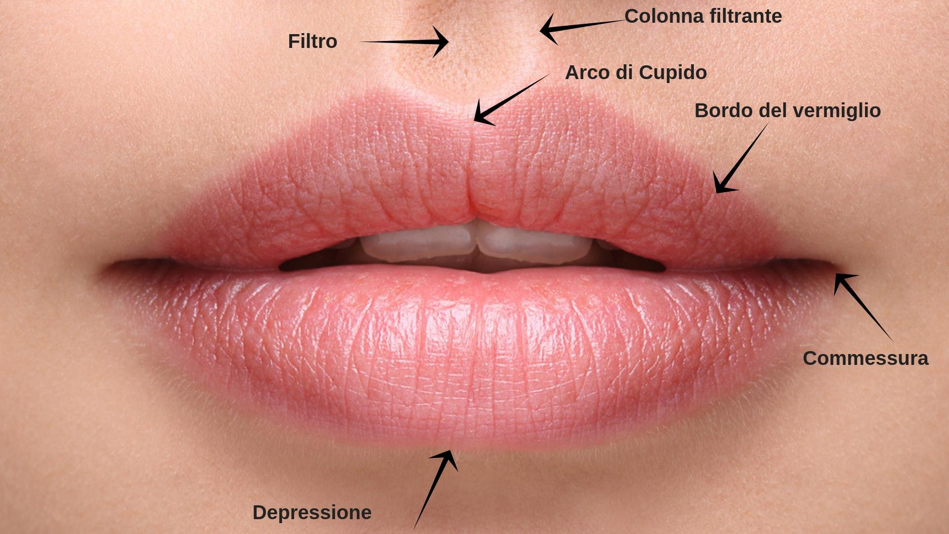 Labbra anatomia